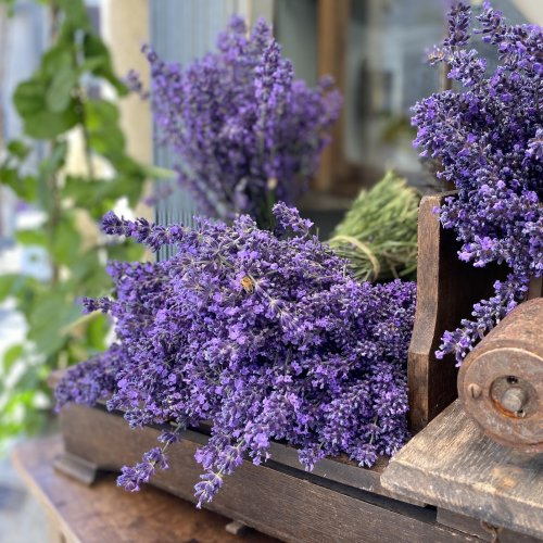 Lavendelstrauss 2