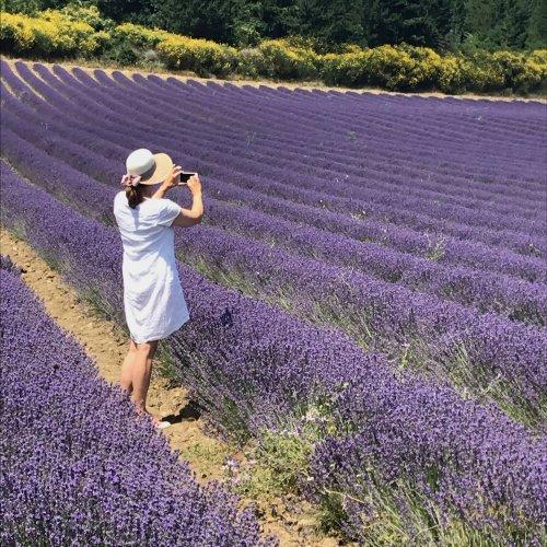 Traumhafte Lavendelfelder!
