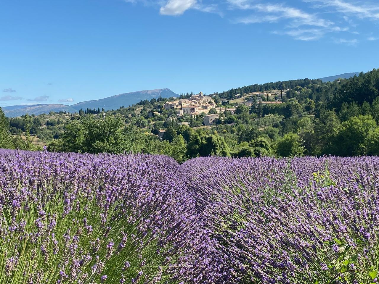 Lavendelfeld 7 - 1
